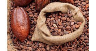 توزیع پودر کاکائو آلکالایز